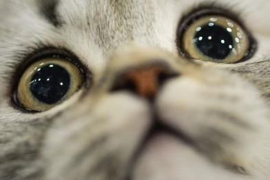 Нижегородцы, которые не смогли поделить кота при разводе не явились в суд