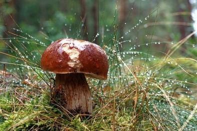 Двоих грибников ищут в Арзамасском районе вторые сутки