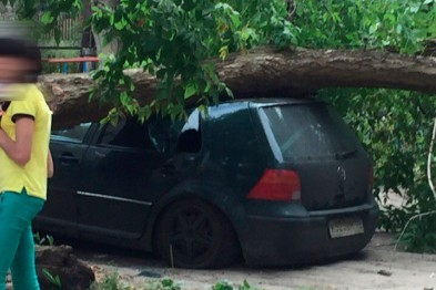 В одном из дворов Арзамаса дерево упало на машину
