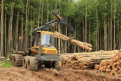 Поножовщина на лесозаготовке в Тоншаевском районе привела к смерти одного из работников