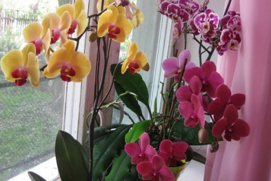 Уход за цветами дома