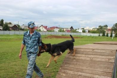 В Нижнем Новгороде появилась тренировочная площадка для собак