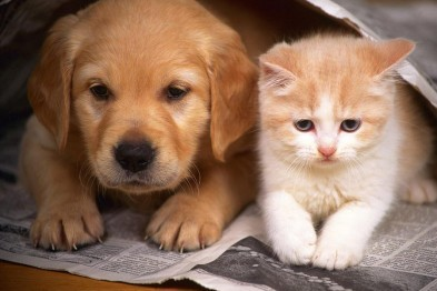 Плановую бесплатную вакцинацию от бешенства для собак и кошек проведут в Арзамасе