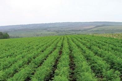 1 млн. 220 тыс. рублей похитил фермер из Арзамасского района с помощью мошеннических действий