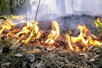 Особый противопожарный режим вводится с 25 апреля в Нижегородской области