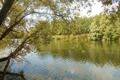 В Арзамасе стало на два памятника природы больше