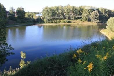 Береговую линию Смирновского пруда очистят от упавших деревьев