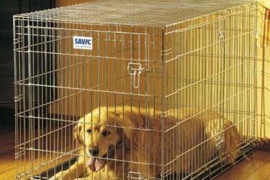 Клетка для собак: преимущества использования домашней клетки для собак