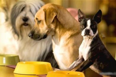 Консервы для собак в интернет-магазине