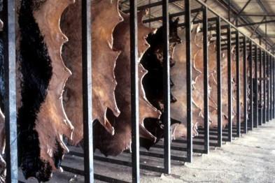 Крупный кожевенный завод построят в Заринске