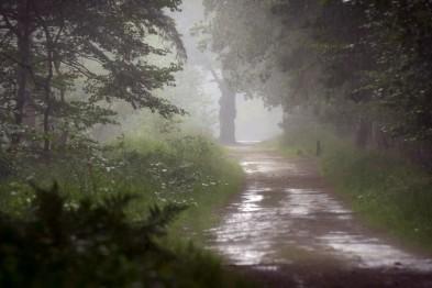 Пенсионер заблудился в лесу в Сормовском районе Нижнего Новгорода