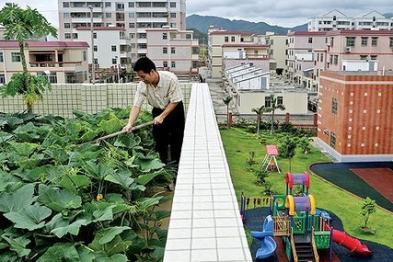 Бизнес на создании мини-огородов в офисах, банках и кафе