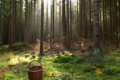 В Арзамасском районе две женщины ушли в лес и не вернулись
