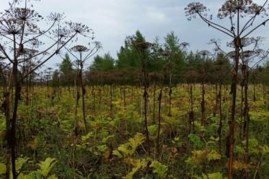 Зарастание земель сельхозназначения сорняками выявили сотрудники Россельхознадзора в Арзамасском районе