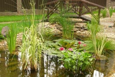 Растения прибрежной зоны на вашем пруду