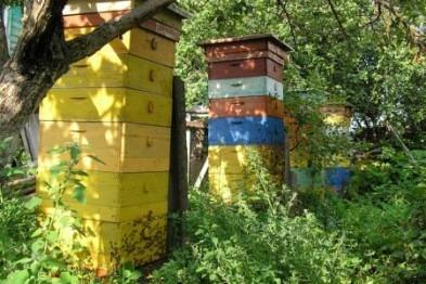 Пчеловодство, как бизнес