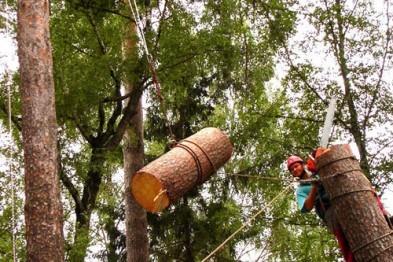 Основные способы валки деревьев