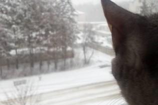 Апрельский снежный коллапс в Арзамасе: как это было