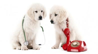 Вызов ветеринарного врача на дом (фото)