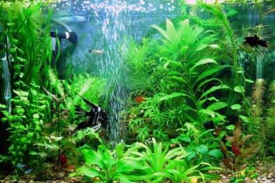 Компрессор для аквариума. Принципы выбора (фото)