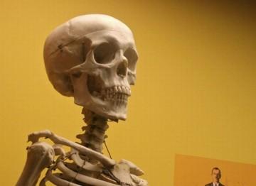 Сколько костей у человека? (фото)