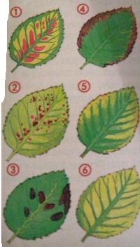 питание-растений